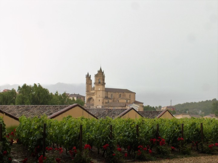 5 vineyards and rain.JPG